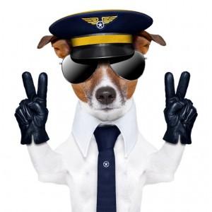 jack russell - pilot (2)